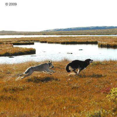 Acana Dog Regionals Wild Prairie