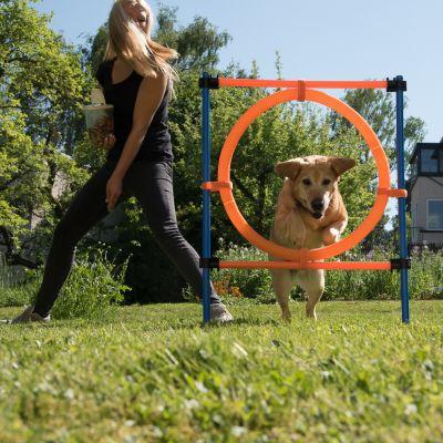 übungsgeräte für hunde