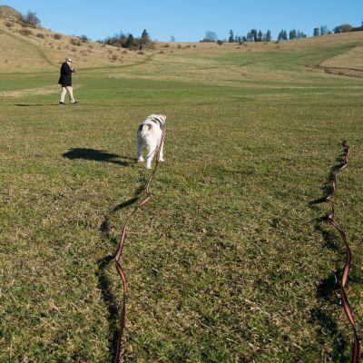 Correa de rastreo Heim engomada para perros