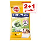 2 + 1 gratis! 3 x 7 stuks Pedigree Dentastix Fresh