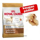 Royal Canin Breed + Rocco-naudankorvat!