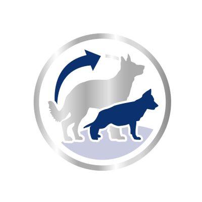 Royal Canin Maxi Puppy Active (Maxi Junior Active)